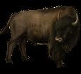Bison ##STADE## - robe 26