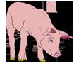Porc ##STADE## - robe 1340000004