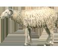 Mouton Adulte - robe 7