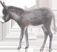 Âne gris bébé - robe 52